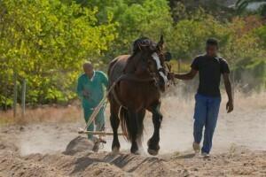 Waterkloof_paarden