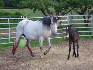Gressac paardjes