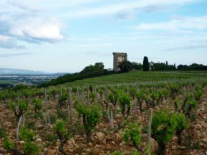 Clos des Papes wijngaard