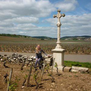 K bij kruis Montrachet2