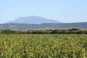 domaine-wijngaarden